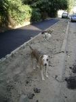 Avem asfalt proaspăt şi borduri europene…