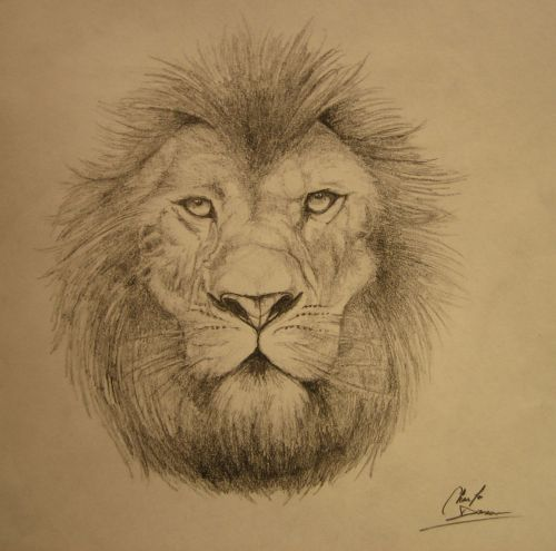 Lion_by_cdan777