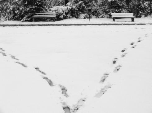 Păşind prin iarnă