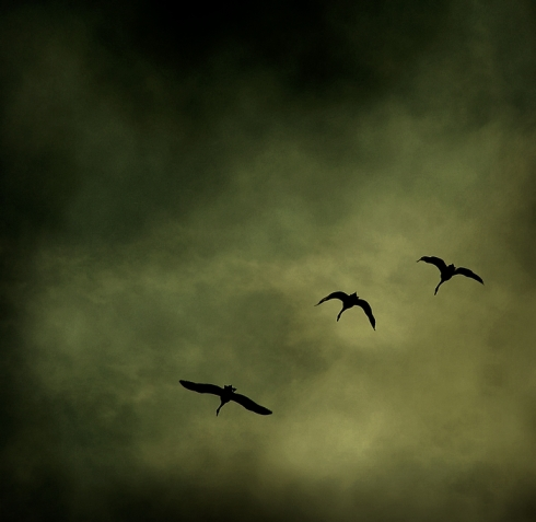 birds_by_bonia